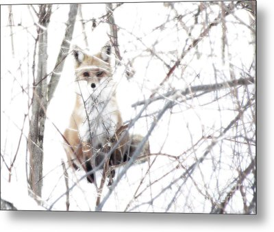 Oh They Can't See Me Metal Print by Deborah Johnson