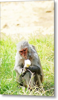 Oil Painting - A Monkey Eating An Ice Cream Metal Print