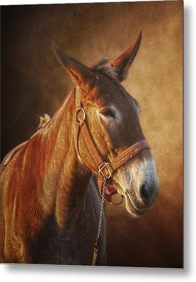 Ol Red Metal Print by Ron  McGinnis