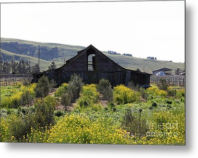 Old Barn In Sonoma California 5d22235 Metal Print by Wingsdomain Art and Photography