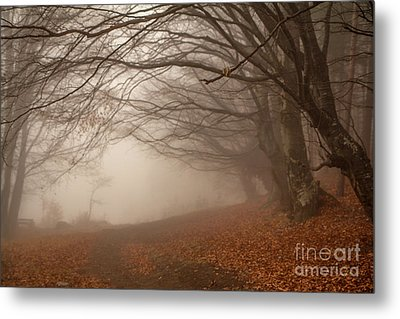 Old Beech Trees In Fog Metal Print by Jivko Nakev