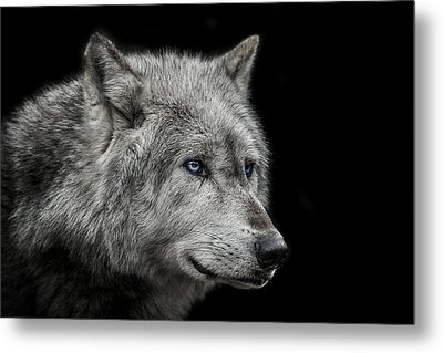 Old Blue Eyes Metal Print