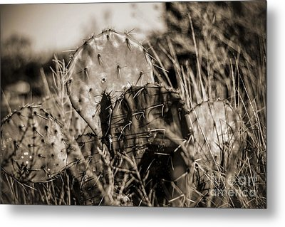 Metal Print featuring the photograph Old Cactus by Amber Kresge