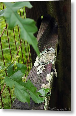 Old Country Fence Metal Print by Deborah Fay