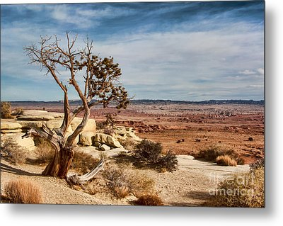 Old Desert Cypress Struggles To Survive Metal Print by Michael Flood