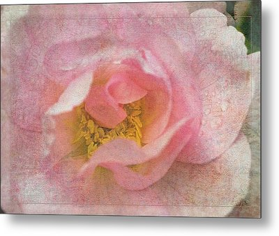 Old English Rose Metal Print by Liz  Alderdice