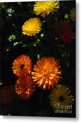 Old-fashioned Marigolds Metal Print by Martin Howard