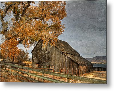 Old Friends Metal Print by Donna Kennedy