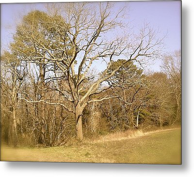 Metal Print featuring the photograph Old Haunted Tree by Amazing Photographs AKA Christian Wilson