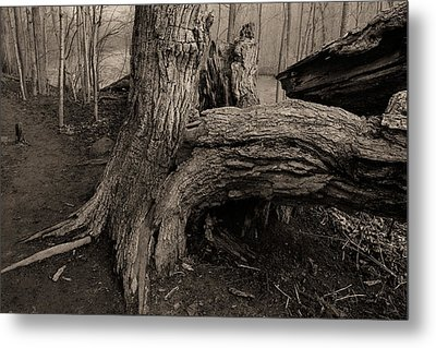 Old Oak 2 Metal Print