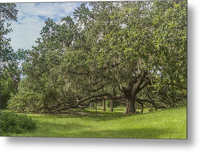Metal Print featuring the photograph Old Oak Tree by Jane Luxton
