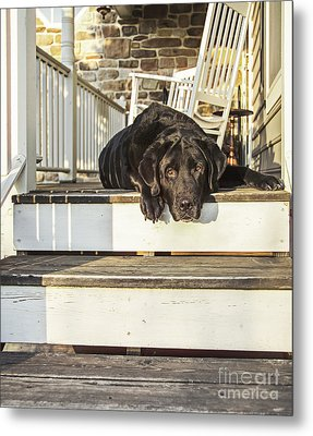 Old Porch Dog Metal Print by Diane Diederich