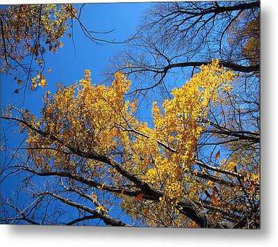 Old Rag Hiking Trail - 121217 Metal Print by DC Photographer