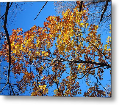 Old Rag Hiking Trail - 121218 Metal Print by DC Photographer