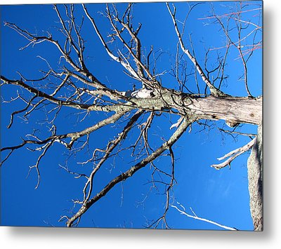 Old Rag Hiking Trail - 121241 Metal Print by DC Photographer