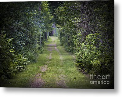 Old Road Through Forest Metal Print by Elena Elisseeva