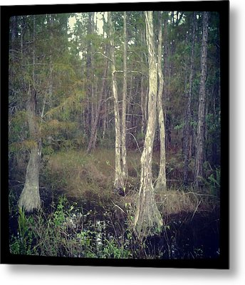 Old Tree Metal Print by Chasity Johnson