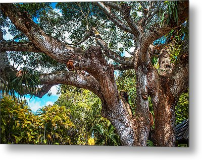 Old Tree In Eureka. Mauritius Metal Print by Jenny Rainbow