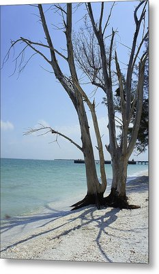 Metal Print featuring the photograph Old Tree by Laurie Perry