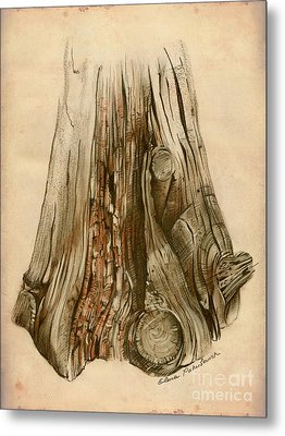 Old Tree Stump - Sketch Chalk Charcoal Sepia - Elena Yakubovich Metal Print by Elena Yakubovich