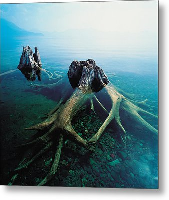 Old Tree Trunks Underwater Metal Print by Panoramic Images