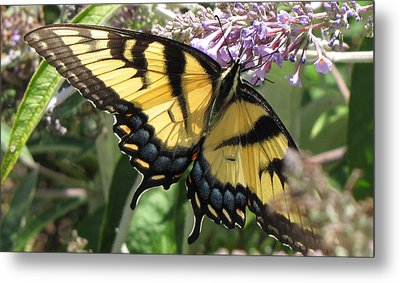 Metal Print featuring the photograph Old World Swallowtail by Jennifer Wheatley Wolf