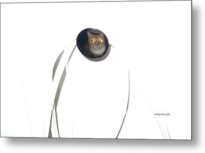 Metal Print featuring the photograph Olga Cat Reflected In Drawer Knob by Kathy Barney