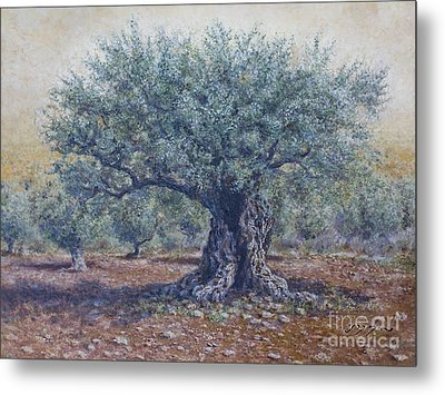 Olive In The Summer  Metal Print