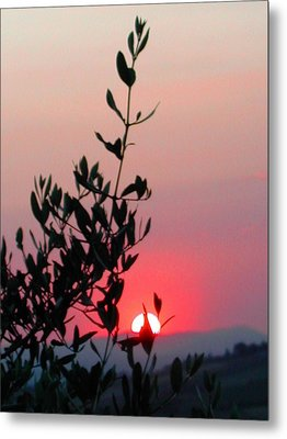 Olive Tree At Sunset Metal Print by Dorothy Berry-Lound