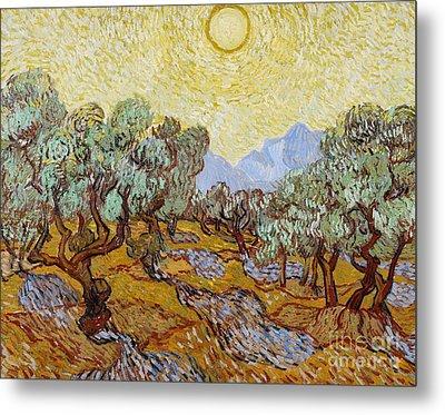 Olive Trees Metal Print by Vincent Van Gogh