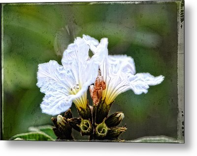 Olive You - Olive Flower Art By Sharon Cummings Metal Print by Sharon Cummings