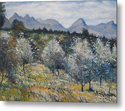 Olives At Diemersfontein Cape South Africa. Metal Print by Enver Larney