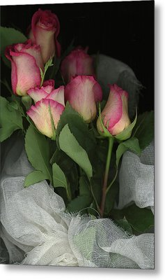 Ombre Tea Rose On Black Background Metal Print by Anna Miller