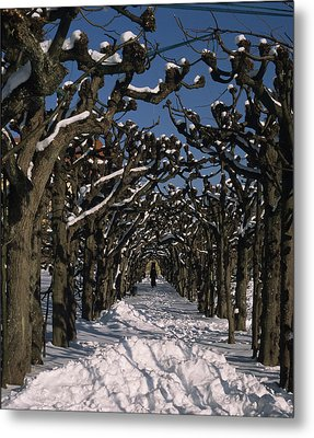 On A Cold Winter Day Metal Print by Angela Bruno