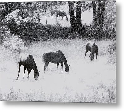 On A Country Road Metal Print by Tony Ruggiero