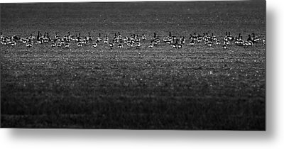On A Field Metal Print by Svetlana Sewell