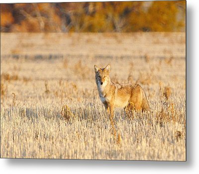 On Alert Metal Print by Shirley Heier