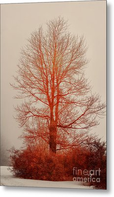 On Fire In The Fog Metal Print by Lois Bryan
