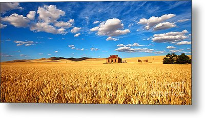 On Golden Fields Metal Print