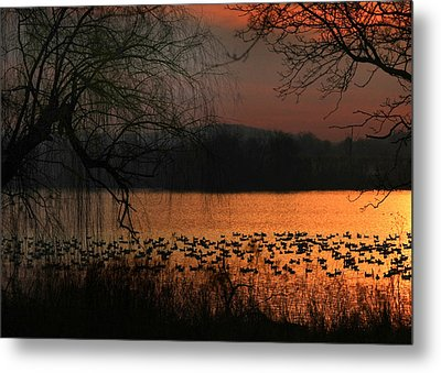 On Golden Pond Metal Print by Lori Deiter