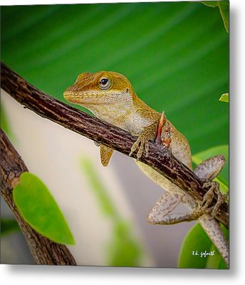 On Guard Squared Metal Print by TK Goforth