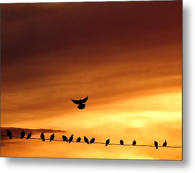 On Line The Social Network Metal Print by Darcy Grizzle