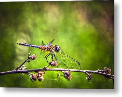 On Lookout Metal Print by Marvin Spates