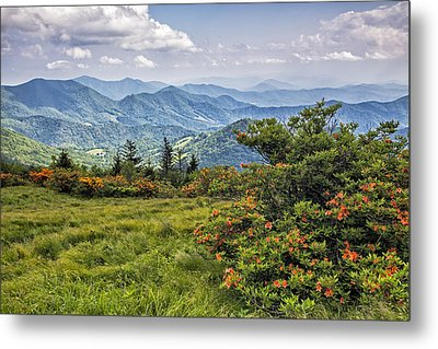 On Roan Mountain 10 Metal Print