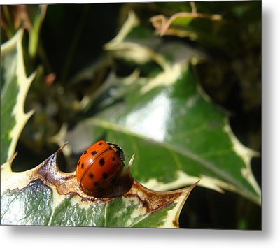 Metal Print featuring the photograph On The Edge by Cheryl Hoyle