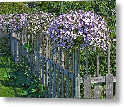 On The Fence Metal Print by Ann Horn