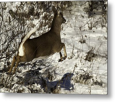 On The Fly  Metal Print by Thomas Young