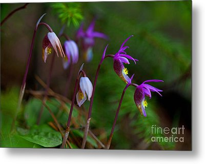 On The Forest Floor Metal Print by Barbara Schultheis