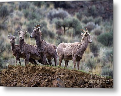 On The Ledge Metal Print by Mike  Dawson