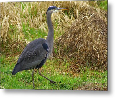 On The Move Metal Print by Jerry Cahill